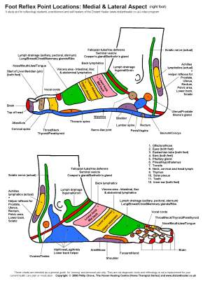 Reflexology Foot Chart, Lateral View