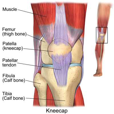 An image of the Knee
