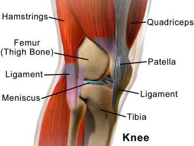 A lateral image of the Knee